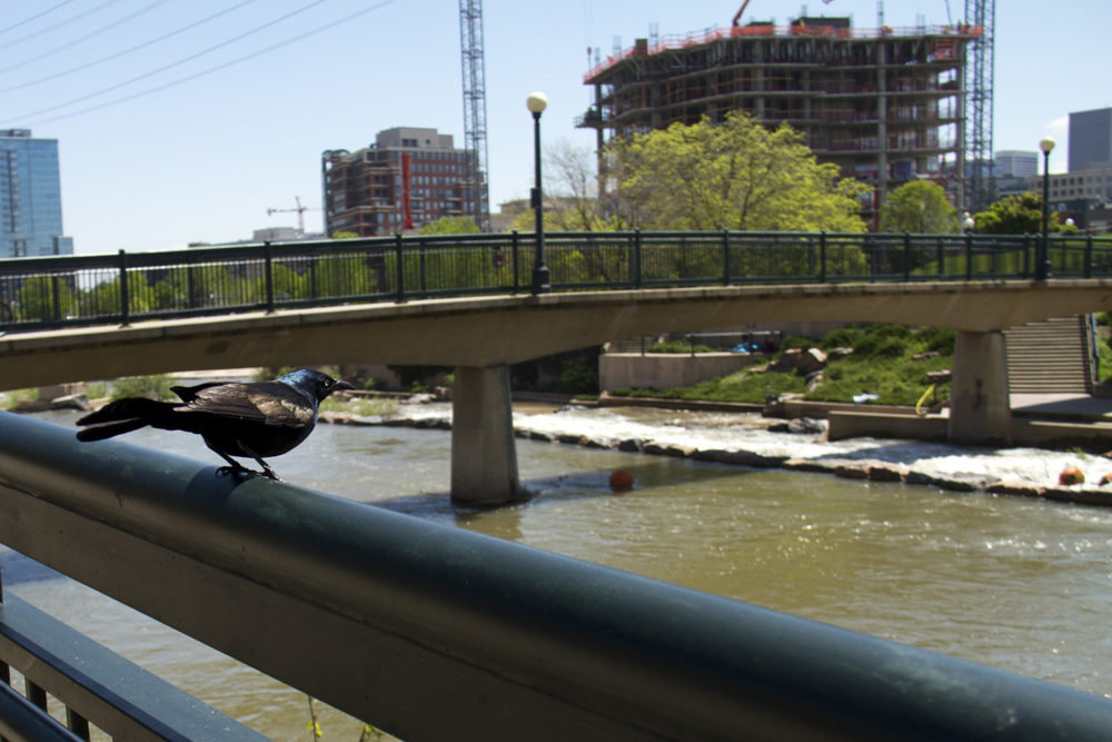 Construction will resume on Confluence Park in late summer 2016. (Kevin J. Beaty/Denverite)
