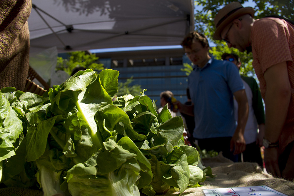 Fresh vegtables at the Toohey & Sons Organic tent at the first Union Station farmers market. (Kevin J. Beaty/Denverite)  union station; food; farmers market; denver; denverite; colorado; kevinjbeaty