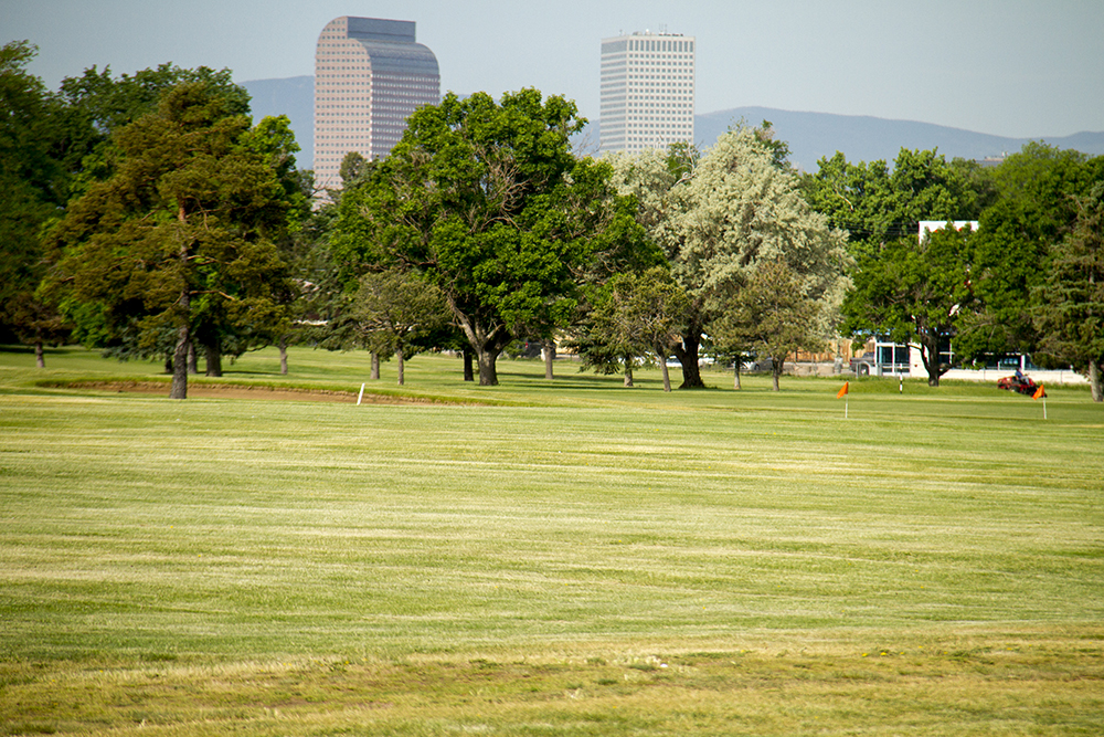 The Denver skyline stands tall behind the Park Hill Golf Club. (Kevin J. Beaty/Denverite)