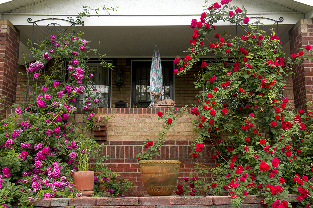 A home on Meade Street in Denver's West Highland neighborhood. (Kevin J. Beaty/Denverite)  west highland; residential; denver; denverite; colorado; kevinjbeaty;