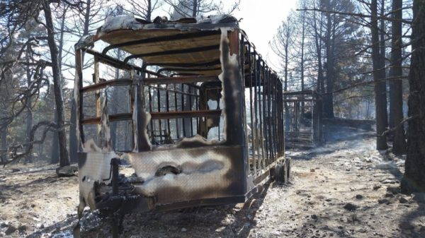 Many of the homeowners near the Cold Springs Fire keep livestock and pets. (Chief Jeff Merino / Lake Dillon Fire-Rescue)