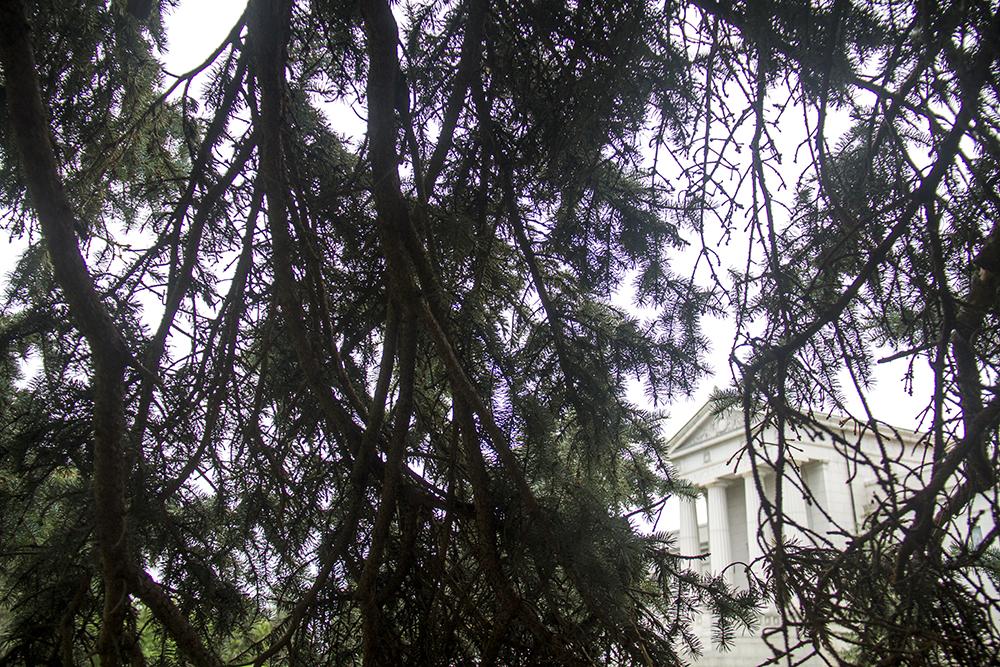 A giant tree outside the Fairmont Mausoleum. (Kevin J. Beaty/Denverite)  fairmount cemetery; kevinjbeaty; denver; denverite; colorado;