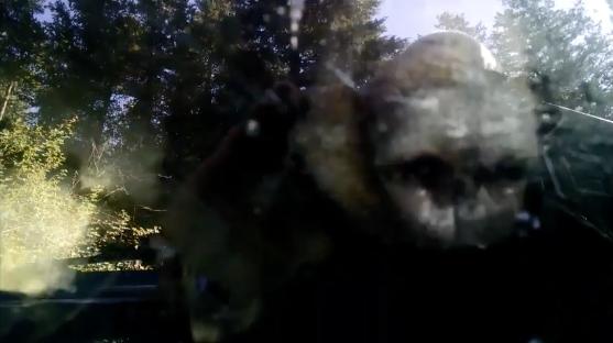A bear got stuck in a Subaru.