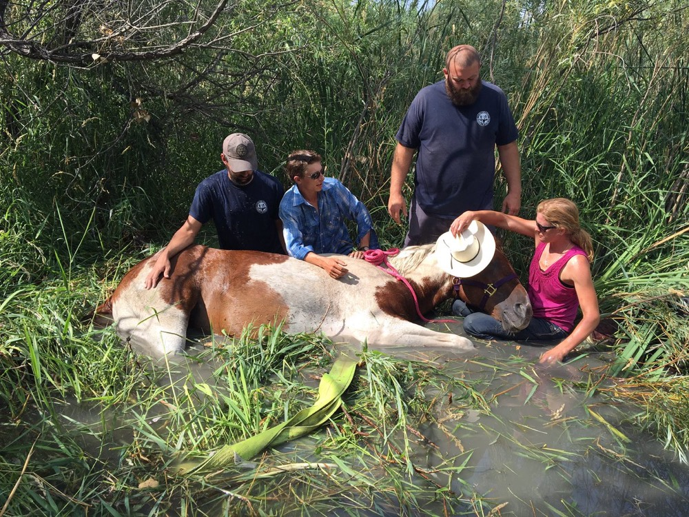 Firefighters are responding to a tired horse who fell and sunk into muddy water within Cherry Creek State Park. (Courtesy South Metro Fire Rescue)