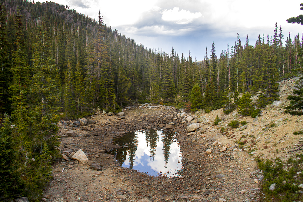 A puddle at Rocky Mountain National Park. (Kevin J. Beaty/Denverite)  rocky mountain national park; rmnp; wilderness; kevinjbeaty; denverite; colorado;