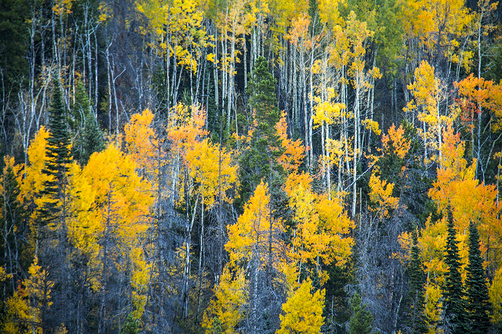 Autumn colors at Rocky Mountain National Park. (Kevin J. Beaty)  fall; autumn; rocky mountain national park; rmnp; wilderness; kevinjbeaty; denverite; colorado;