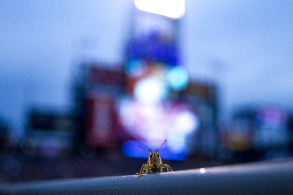 I found a friend. Colorado Rockies vs L.A. Dodgers. August 4, 2016. (Kevin J. Beaty/Denverite)  colorado rockies; los angeles dodgers; baseball; sports; kevinjbeaty; coors field; denver; denverite; colorado;