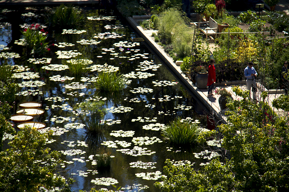 A microscene of the Denver Botanic Garden, as seen from Jaymie Toma's balcony. (Kevin J. Beaty/Denverite)