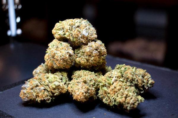 Pure Love CBD strain of cannabis at Simply Pure. (Chloe Aiello/Denverite)