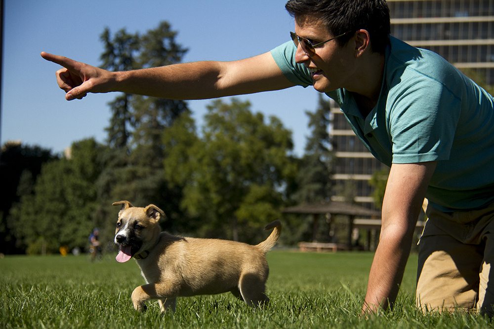 Kyle Frazer plays with his puppy, Gwen, in Cheesman Park. (Kevin J. Beaty/Denverite)