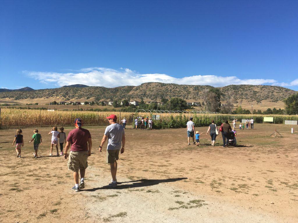 The corn maze at Chatfield Farms. (Dave Burdick/Denverite)