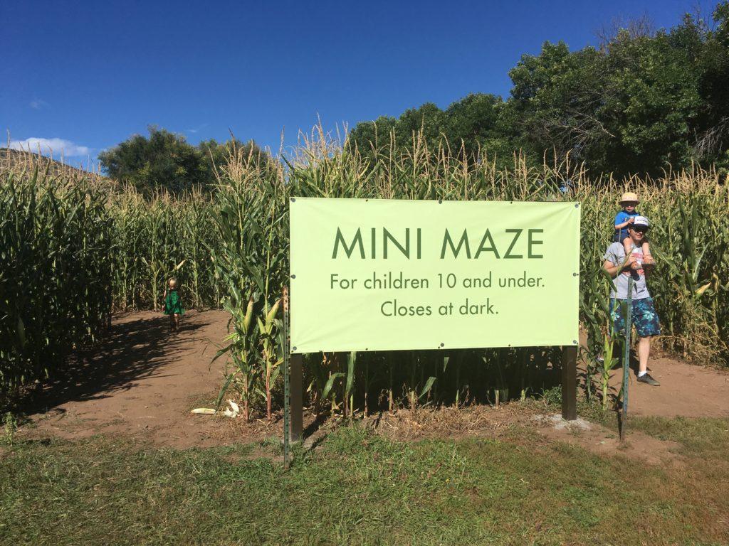 There's a mini-maze at the corn maze at Chatfield Farms. (Dave Burdick/Denverite)
