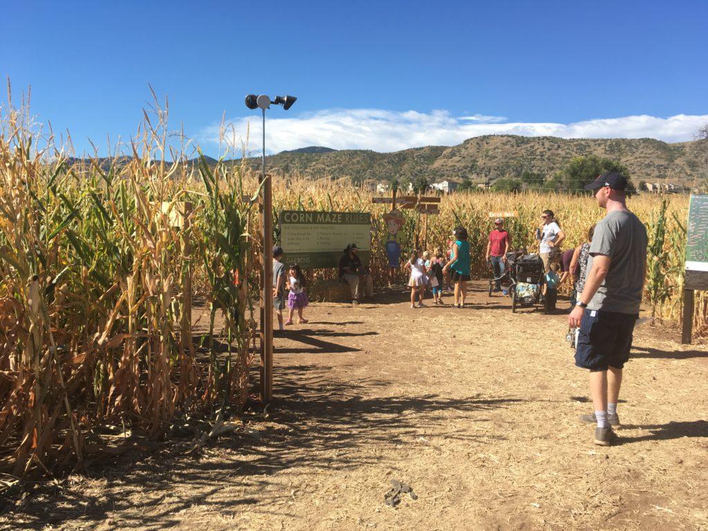Denver Botanic Gardens says the corn maze at Chatfield Farms is 8 acres. (Dave Burdick/Denverite)
