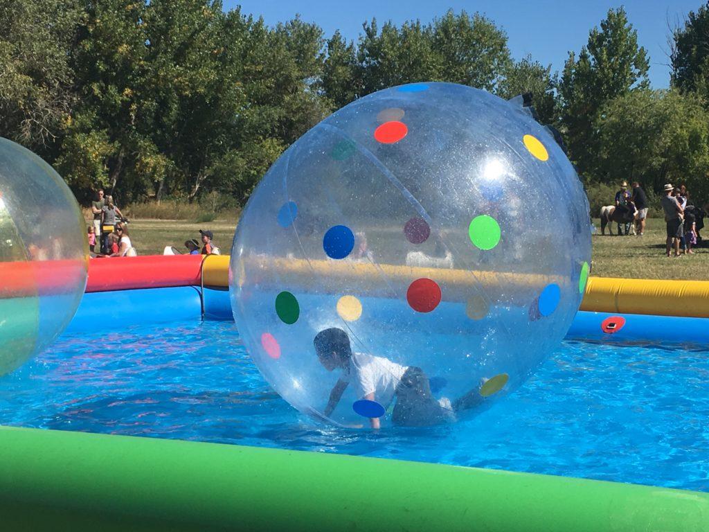 Hamster balls in a pool at Chatfield Farms. (Dave Burdick/Denverite)