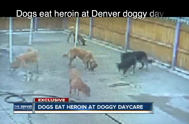 Screenshot of dog eating heroin. ABC 7