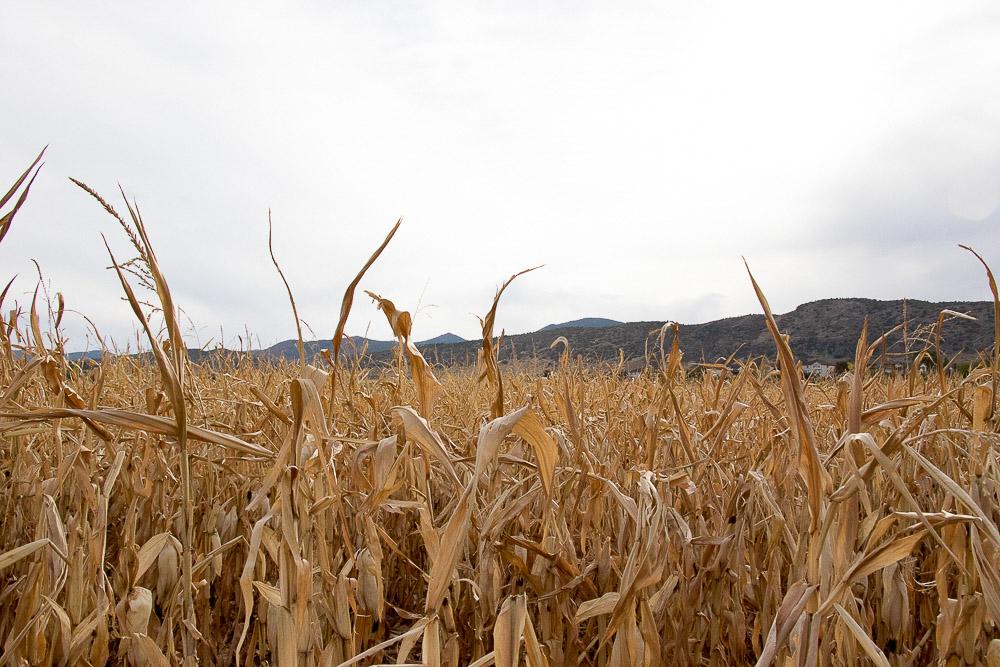 A fall skyline. (Chloe Aiello/Denverite)