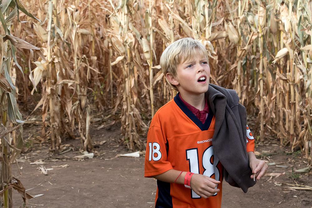 Hopelessly lost in the corn maze. (Chloe Aiello/Denverite)