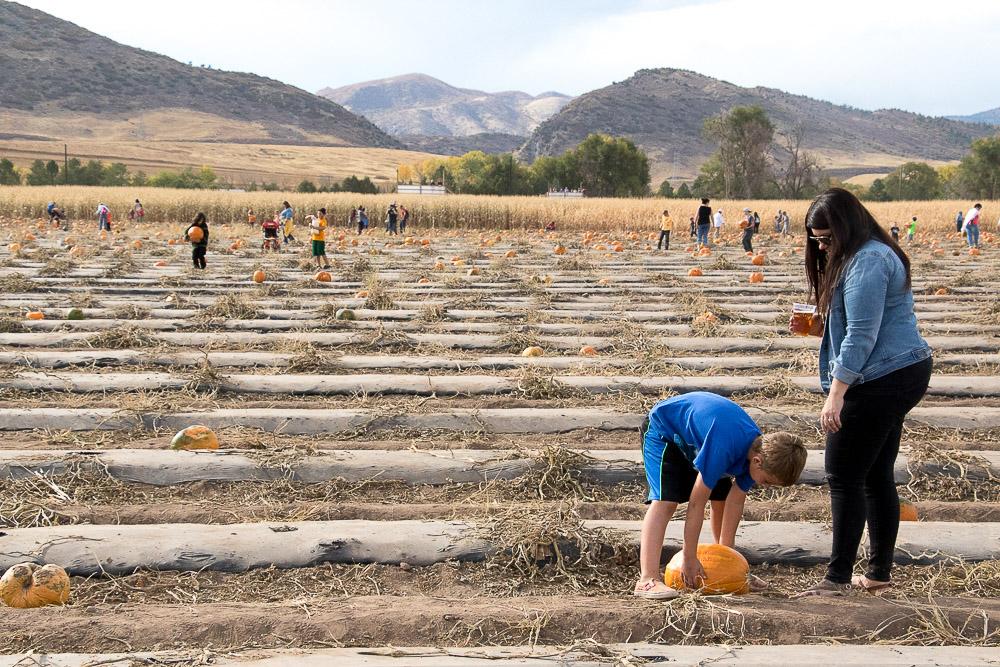 Chatfield Farms Pumpkin Festival. (Chloe Aiello/Denverite)