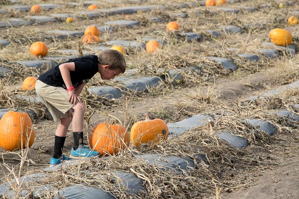The 28th annual Pumpkin Festival drew more people than ever to Chatfield Farms. (Chloe Aiello/Denverite)
