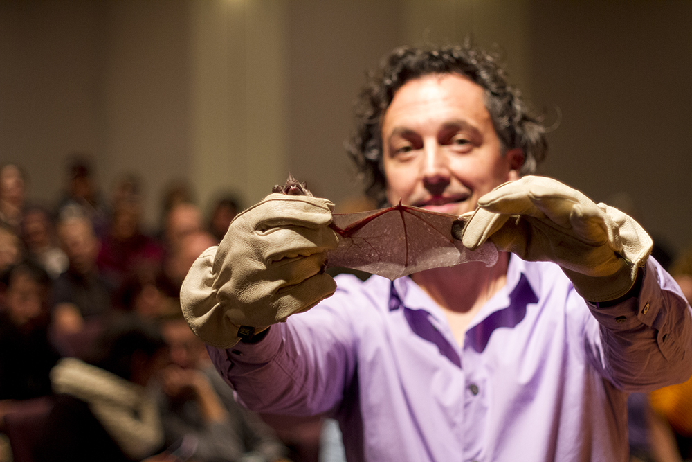 Rob Mies shows the wing span of a Jamaican leaf-nosed bat  (Phyllostomidae) at the Denver Museum of Nature and Science. (Kevin J. Beaty/Denverite)  dmns; denver museum of nature and science; bats; biology; kevinjbeaty; denver; colorado;