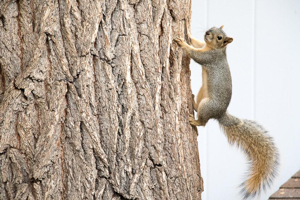 Kammie feeds this sassy squirrel. (Chloe Aiello/Denverite)