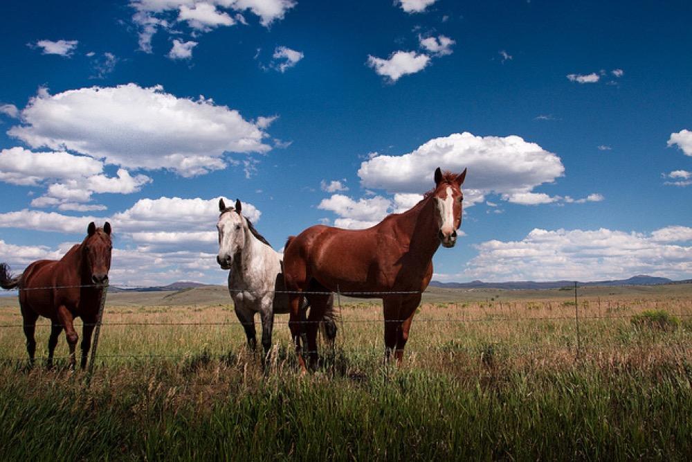 Williams Fork Valley ranch. (Scott Witt/Flickr)