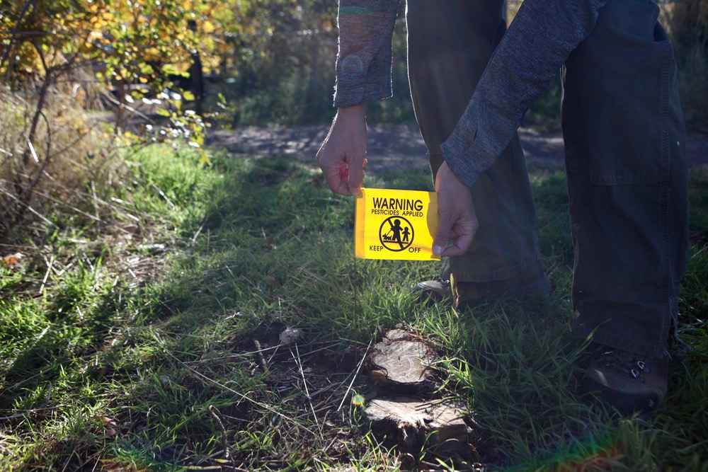 A noxious plant that has been sprayed with herbicides. Do not eat it. (Andrew Kenney/Denverite)