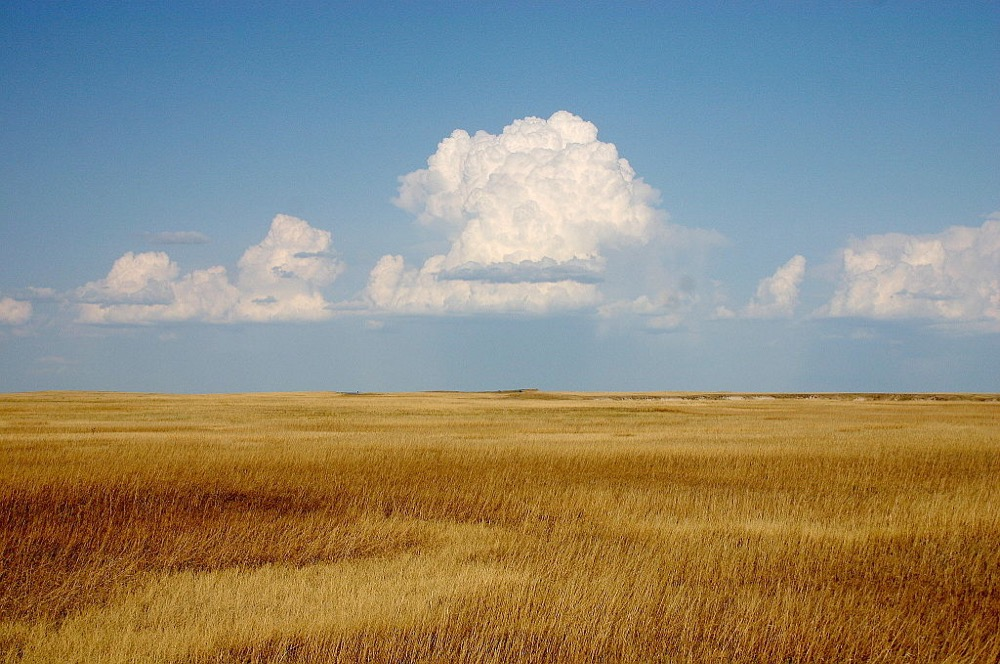 A prairie. (Wing-Chi Poon/Wikimedia Commons)