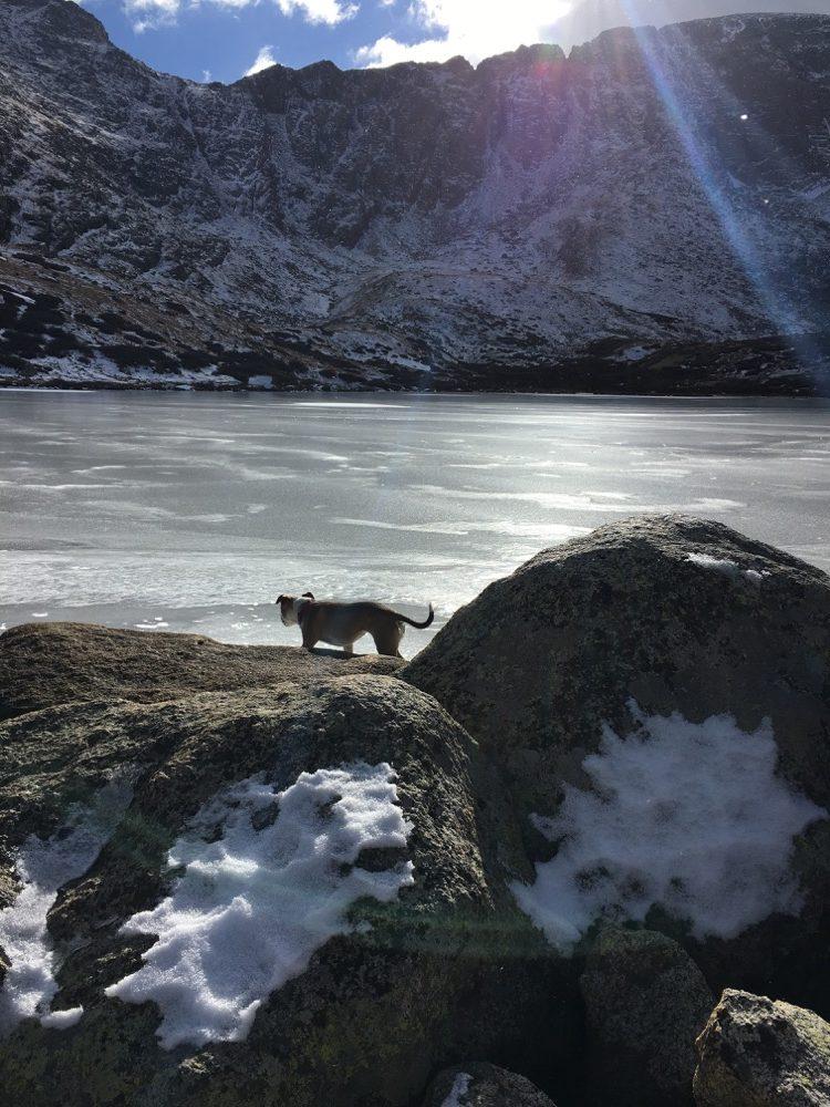 Obligatory exploration dog. (Betsy Fowler/Denverite)