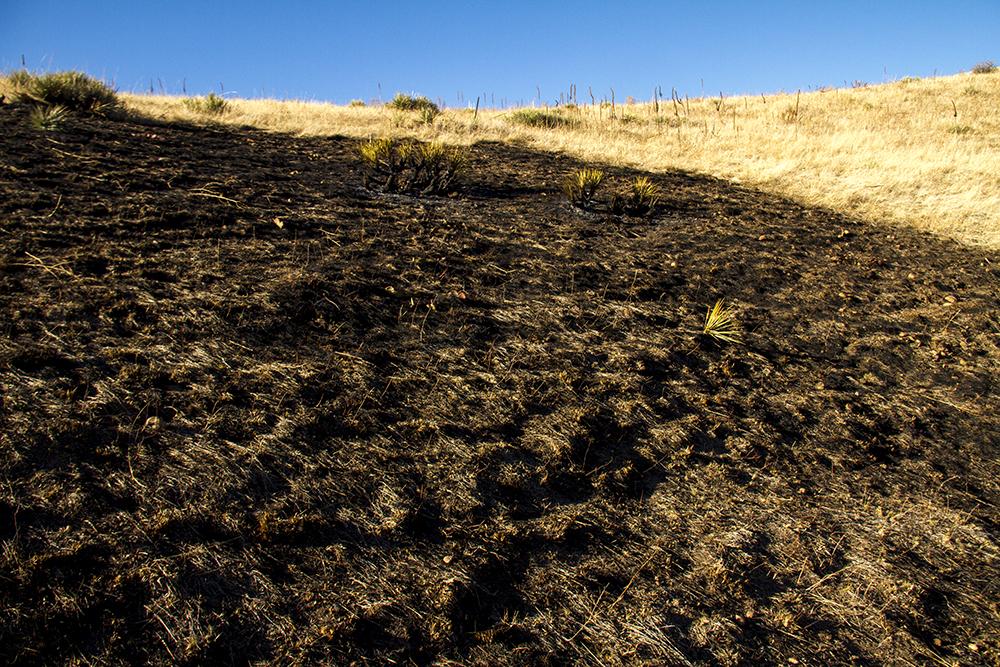 Green Mountian after a wildfire. (Kevin J. Beaty/Denverite)  green mountain; fire; kevinjbeaty; wildfire; denver; denverite; lakewood; colorado;