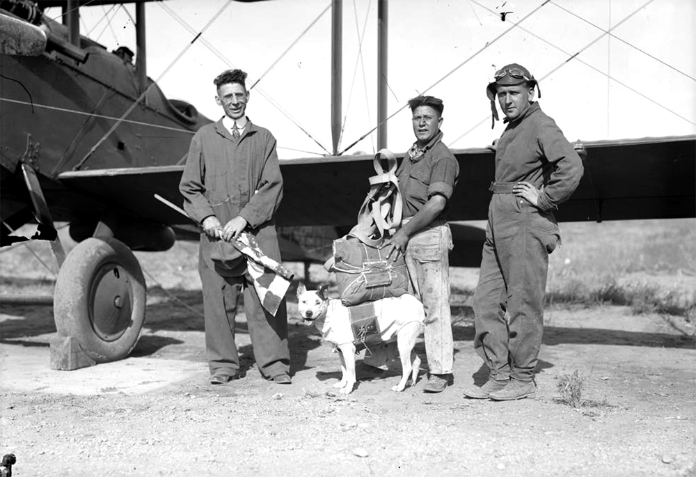 Members of the Colorado Air National Guard, Jimmy Ziegler (center), Danny Kearns (right), and unidentified man, pose next to an airplane and Jeff the dog outfitted with a parachute in Denver, Colorado. (Harry Mellon Rhoads/Denver Public Library/Western History Collection/Rh-715)