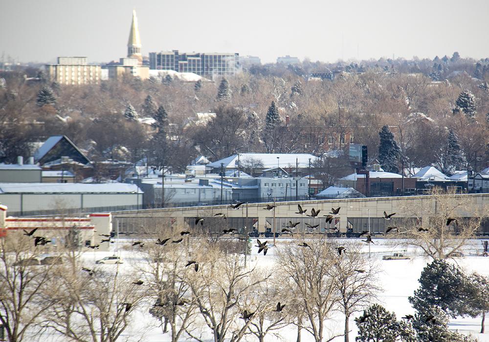 Geese fly by DU, seen from Ruby Hill. Dec. 17, 2016. (Kevin J. Beaty/Denverite)  snow day; winter; sledding; denver; denverite; colorado; kevinjbeaty;