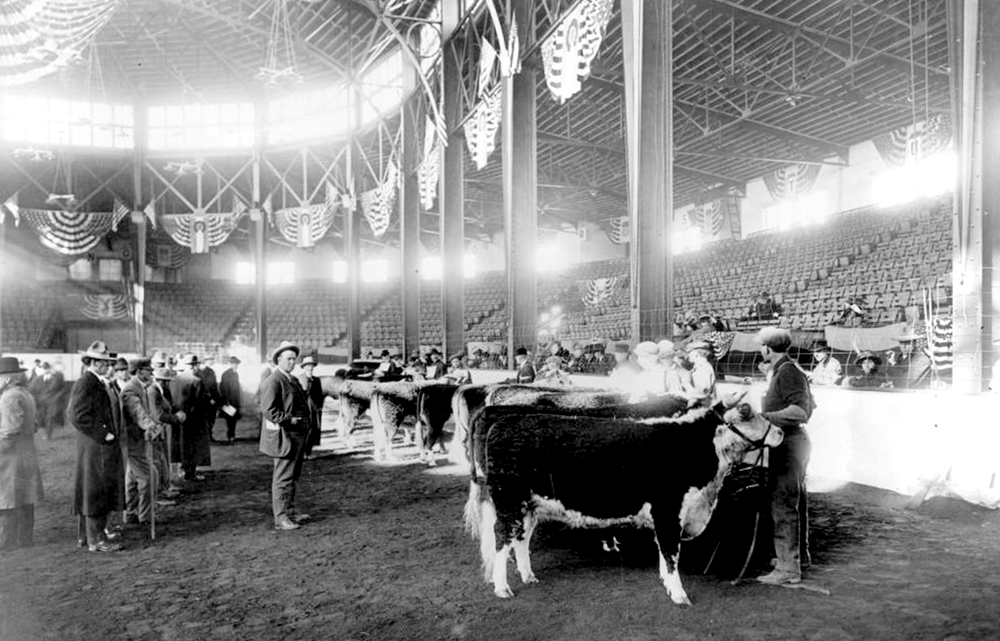 View of a cattle auction at the National Western Stock Show National Amphitheater in Denver, Colorado. Men and probably judges stand near cattle in the dirt arena. Circa 1915. (Denver Public Library/Western History Collection/Z-8806)  denver; denverite; denver public library; western history collection; archive; archival; National Western Stock Show; nwss;