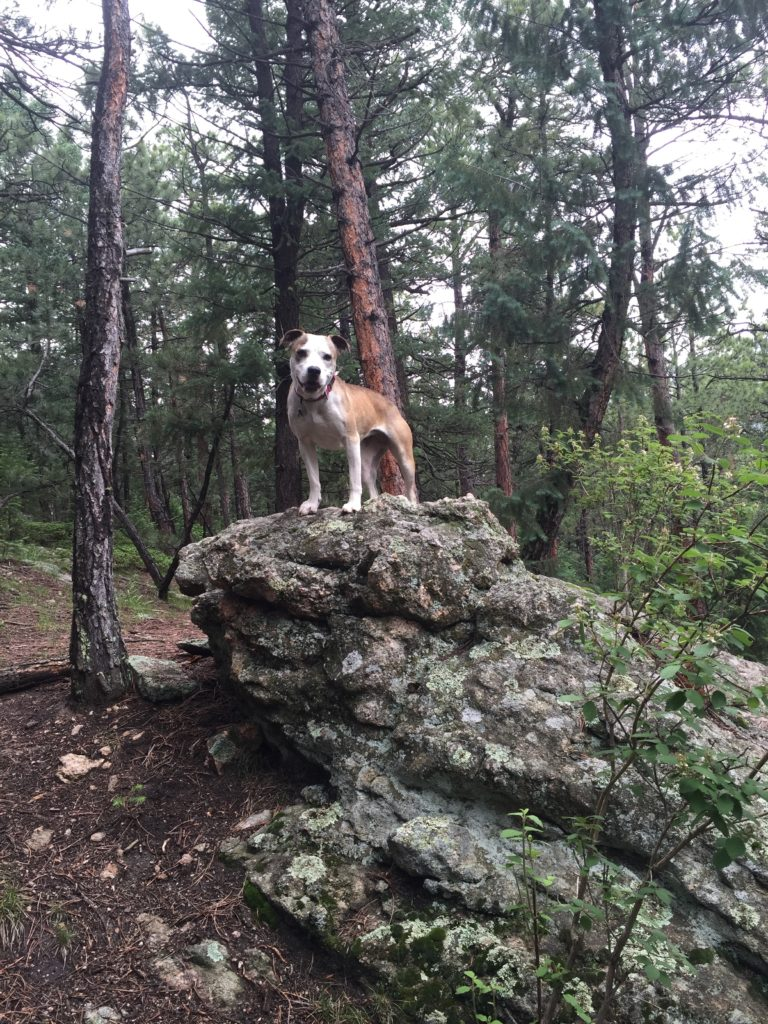 Some other dog I don't know. (Andrew Kenney/Denverite)