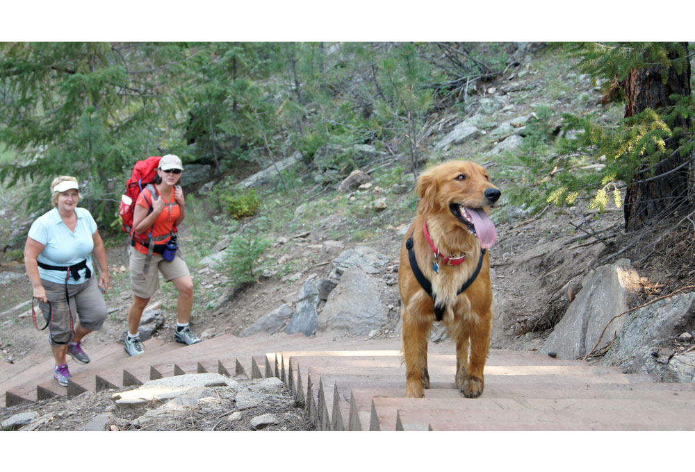 A dog and a person at the Elk Meadow dog park. (Jeffco Open Space)