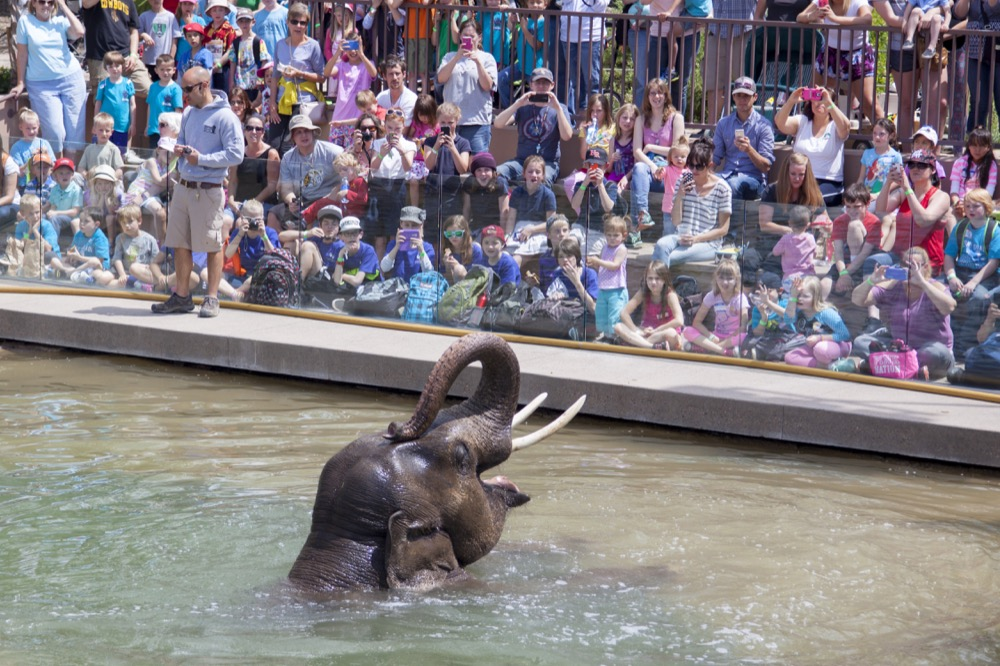 Billy the elephant at the Denver Zoo. (Courtesy of the Denver Zoo)