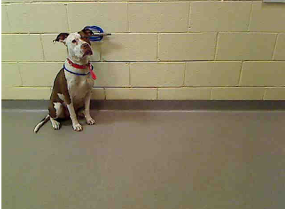 You could adopt Wilma. (Denver Animal Shelter)