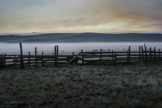Cattle graze at Buffalo Peaks Ranch. (Larry Glass/Rocky Mountain Land Library)