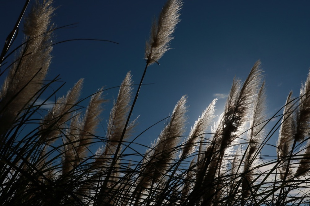 Tall grass. (KaoruK/Pixabay)