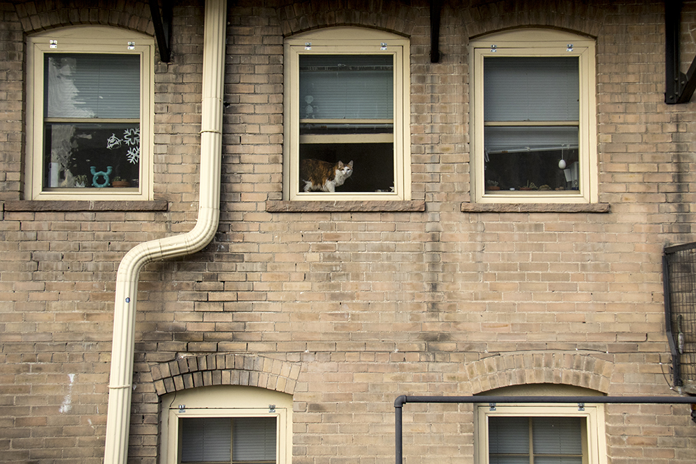 A North Capitol Hill window cat. (Kevin J. Beaty/Denverite)  denver; colorado; kevinjbeaty; denverite; north capitol hill; cowx; weather;