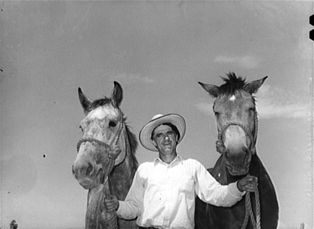 Ernest W. Kirk Jr., with team of mules which was bought with FSA (Farm Security Administration) loan. Near Ordway, Colorado, Sept. 1939. (Russell Lee/Library of Congress/LC-USF34-034126)