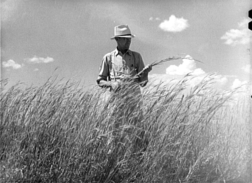 FSA (Farm Security Administration) supervisor, Baca County, Colorado, standing amidst some of the grass which was native to this section before the plow came along, Sept. 1939. (Russell Lee/Library of Congress/LC-USF34-034129)