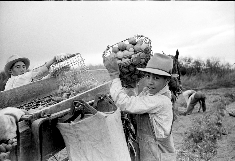 Potato pickers, Rio Grande County, Colorado, Oct. 1939. (Arthur Rothstein/Library of Congress/LC-USF33-003369)