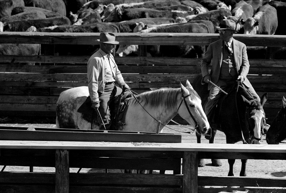 Buyers from the packing plant, stockyards, Denver, Colorado, Oct. 1939. (Arthur Rothstein/Library of Congress/LC-USF33-003414)