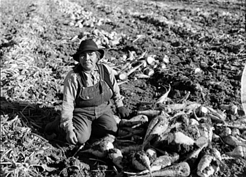 Indian woman sugar beet worker from Oklahoma. Adams County, Colorado, Oct. 1939. (Arthur Rothstein/Library of Congress/LC-USF34-028741)