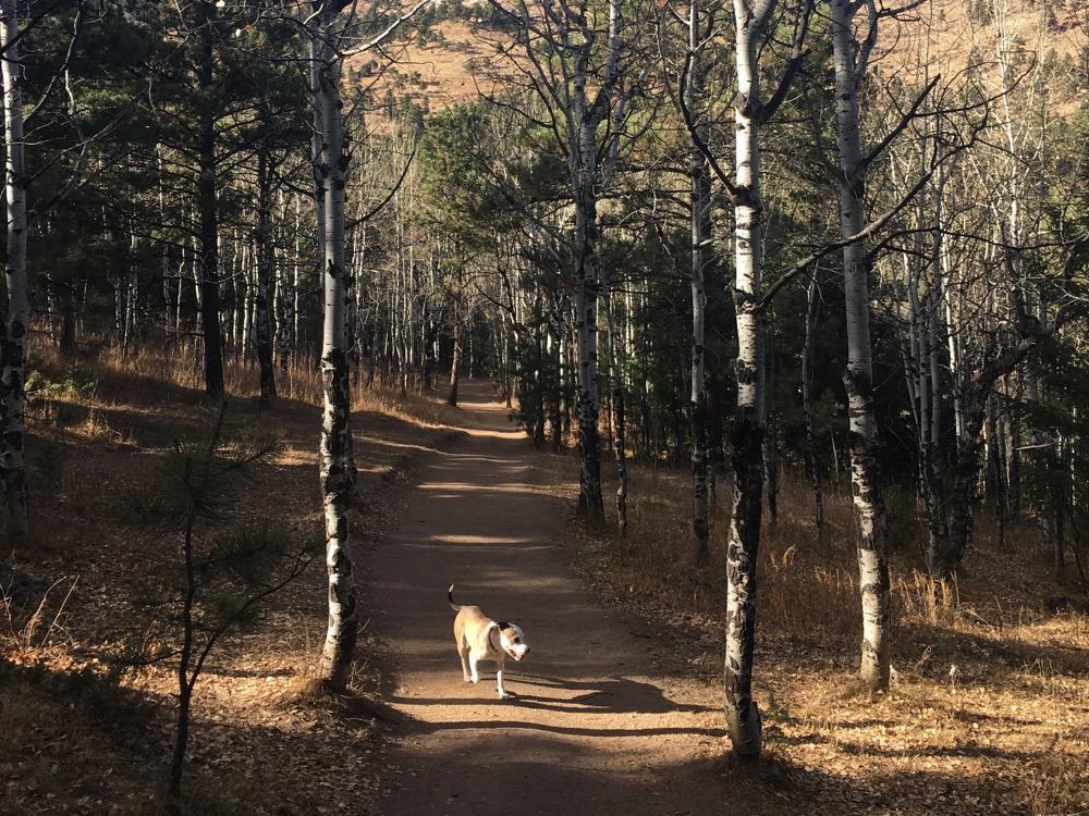 A dog at Elk Meadow dog park. (Andrew Kenney/Denverite)