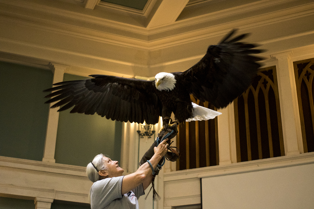 Barbara Walton holds an 8-year-old bald eagle on stage for a special Earth Day Sunday service. The Althea Center for Engaged Spirituality. (Kevin J. Beaty/Denverite)