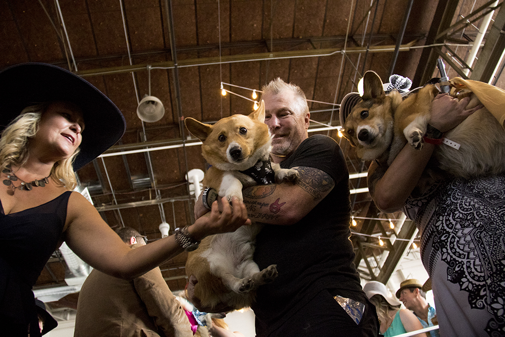 Rob Rushing holds his champion Corgi Erk. A Kentucky Derby party at Stanley Marketplace, May 6, 2017. (Kevin J. Beaty/Denverite)  stanley marketplace; kentucky derby; aurora; kevinjbeaty; denverite; colorado; dogs; pets; animals;