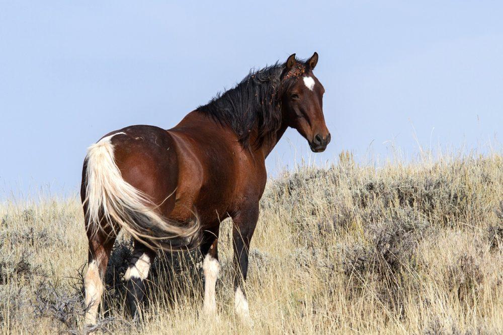 A horse. (kasabubu/Pixabay)