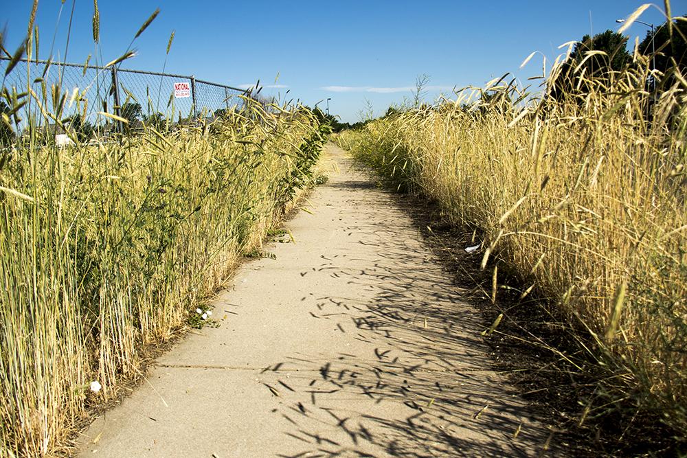 A Montbello sidewalk. (Kevin J. Beaty/Denverite)  montbello; denver; denverite; colorado; kevinjbeaty;